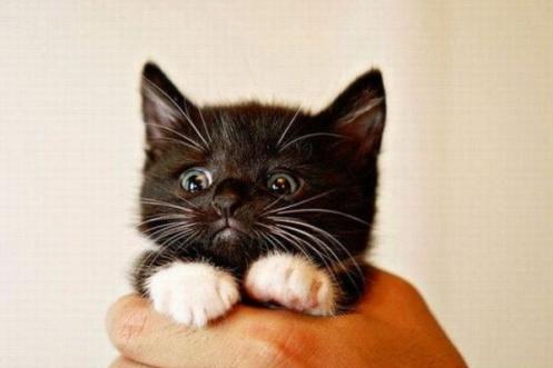 Scared-kitten