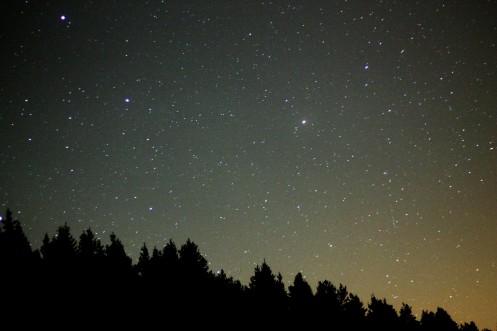 ison trees clear fri night